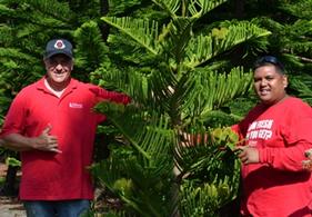 Christmas In Hawaii Hawaii S Christmas Tree Farm Oahu